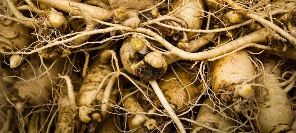 Ginseng roots.