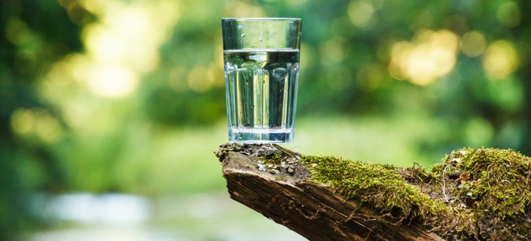 A glass of water on a rock in a forest.
